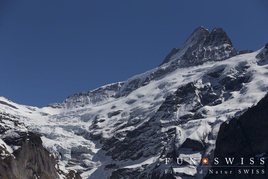 シュレックホルンの氷河