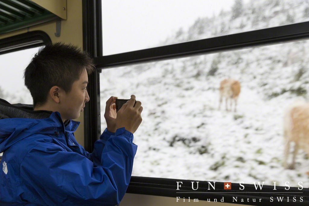 車窓は雪!牛さん、寒そう。。。