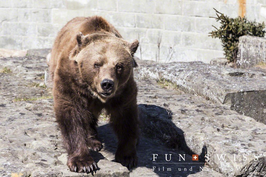 熊公園のクマさん