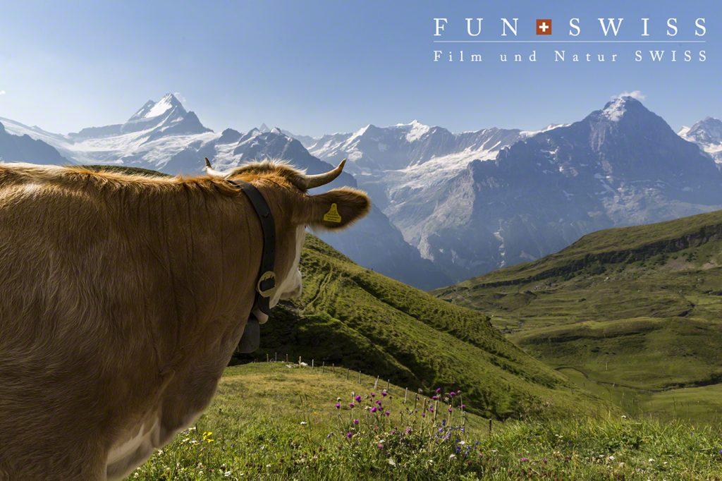 牛さんも見とれる絶景。。。