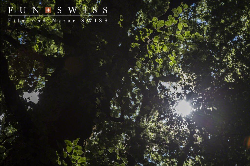 広大なブナ林での森林浴、、、おぼれそうな緑です。