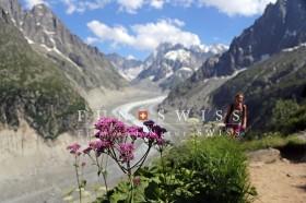 アルジェンチェール氷河と花