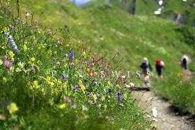 高山植物とトレイル