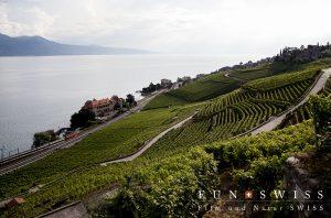 湖畔に広がる葡萄の段々畑
