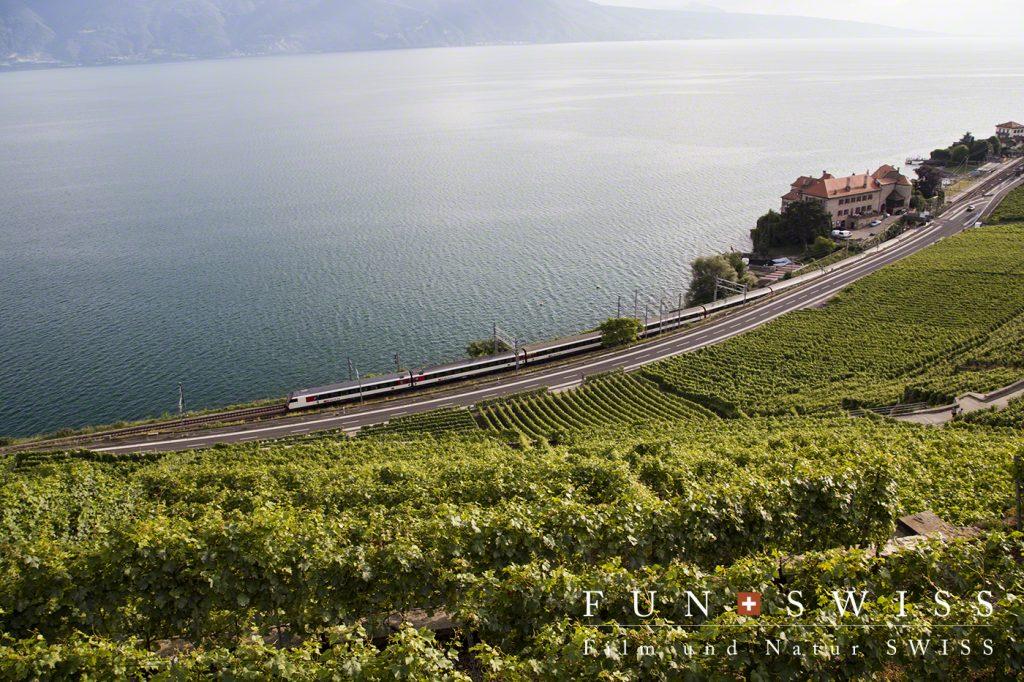 湖畔沿いの、葡萄畑の中を走る特急列車
