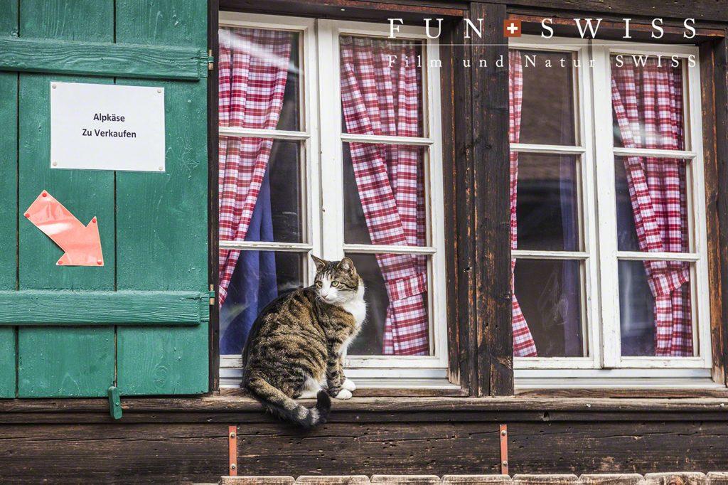 山で作られたチーズの無人販売は、、、猫ちゃん管理?