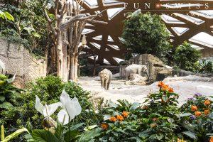 アジアゾウの家族が過ごす