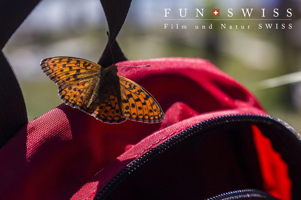 ヒョウモン蝶、それは花ではありませんよ。。。