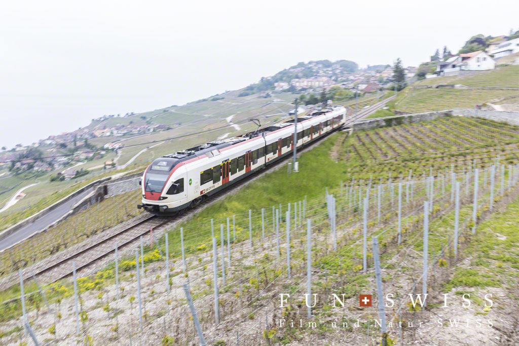 ブドウ畑の中を走る列車もあります。