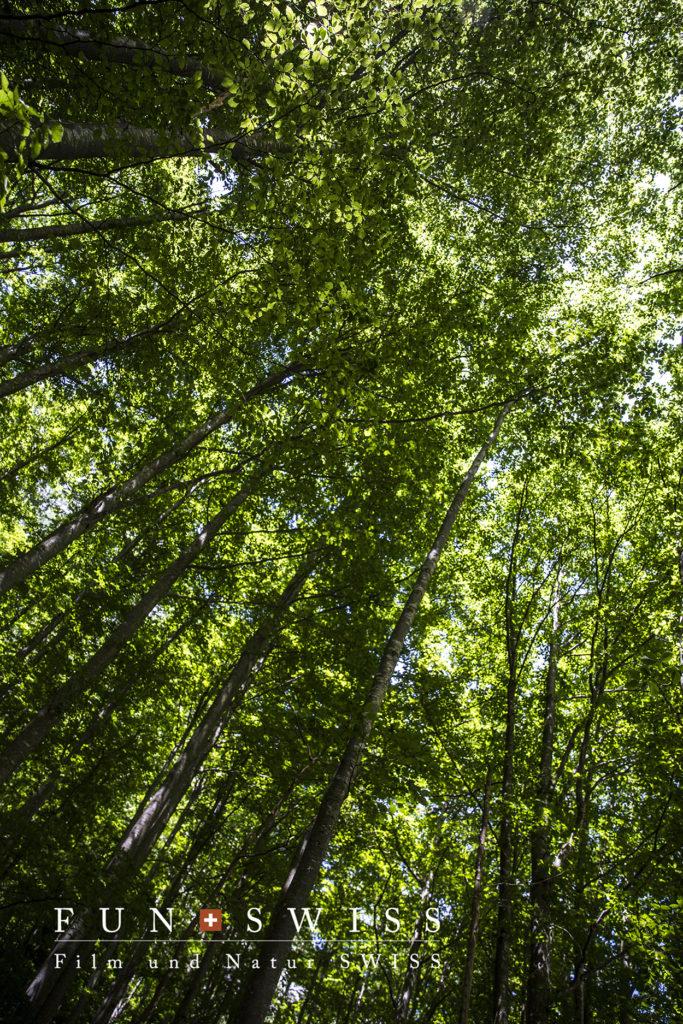 木漏れ日が眩しいブナ林