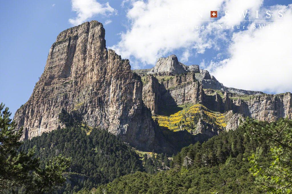 トザル・デル・マリョ2,254mとマメ科の黄色い固有種